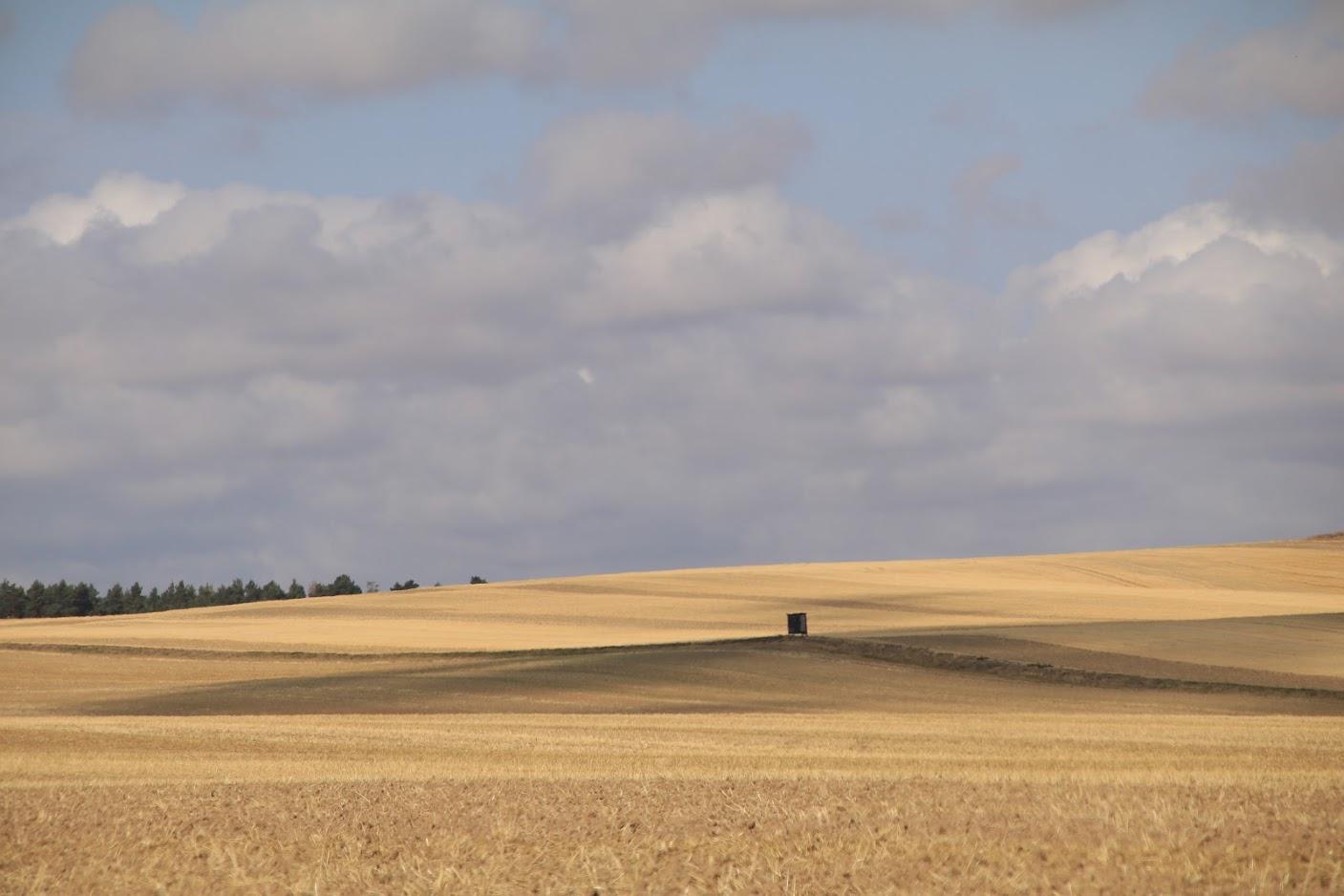 Getreidefeld mit Hochsitz